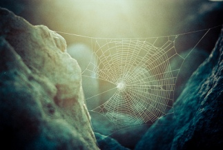 spider web stretched between rocks
